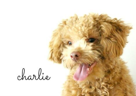 charlie_02