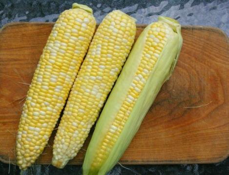 corn_01
