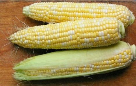 corn_02