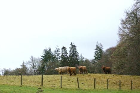 highland_02